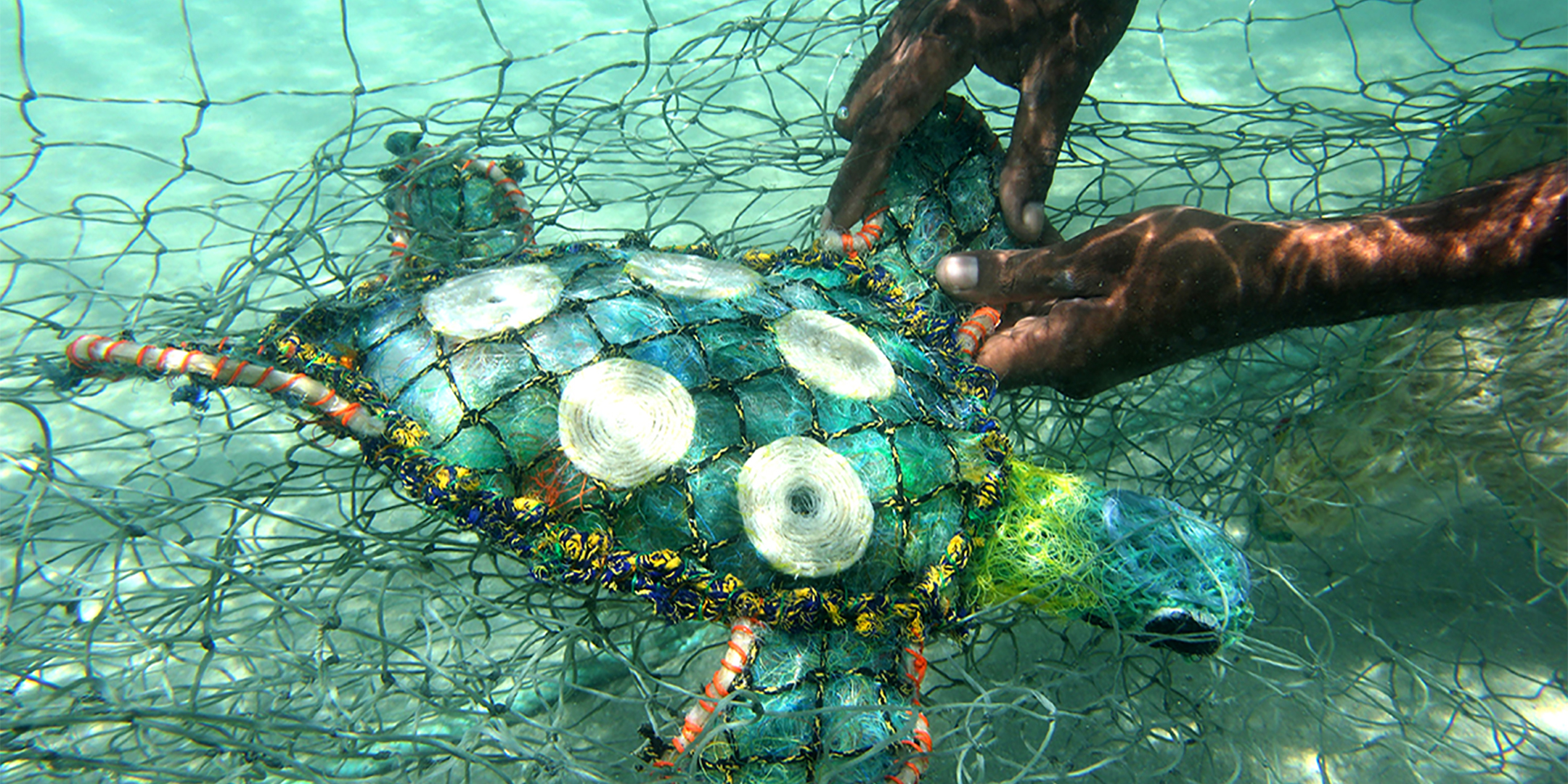 Ghost net turtle in the water of Erub Island. Image: Erub Arts.
