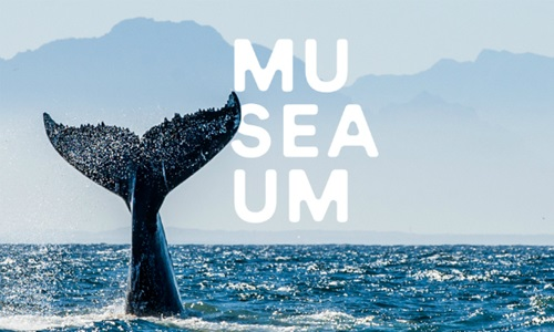 museaum whale