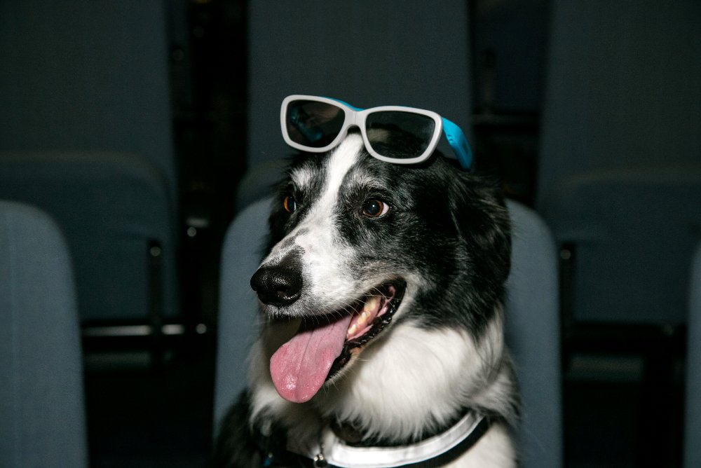 Bailey relaxing in the 3D cinema