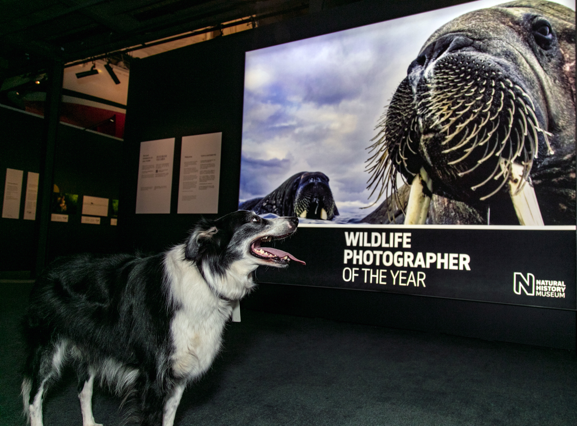 Bailey viewing Wildlife Photographer of the Year 54