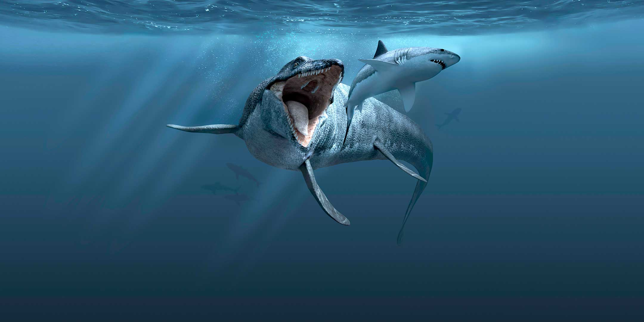 Mosasaurus chasing Great White Shark